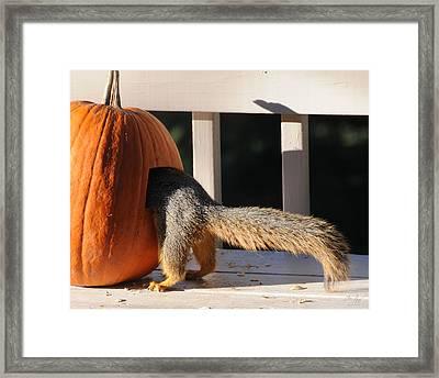 Squirrel And Pumpkin - Breakfast Framed Print by Aaron Spong