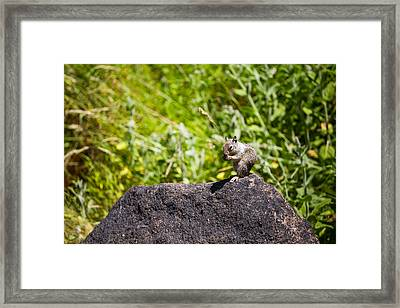 Squirrel Lunch Framed Print by Mike Lee