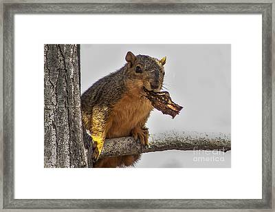 Squirrel Lunch Time Framed Print by Robert Bales