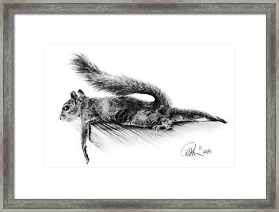 Squirrel Framed Print by Mario Pichler