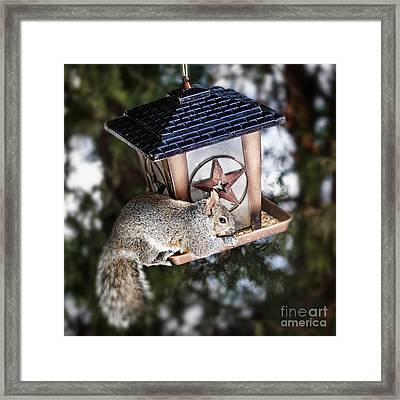 Squirrel On Bird Feeder Framed Print by Elena Elisseeva