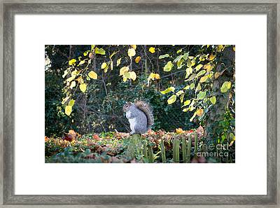 Squirrel Perched Framed Print by Matt Malloy