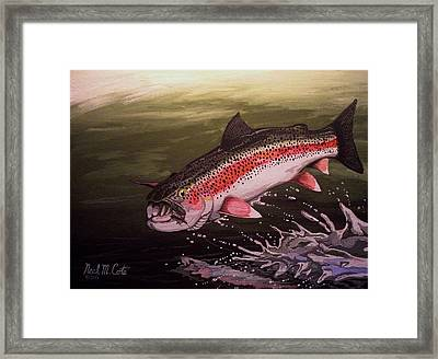 Squwalla Surprise Framed Print by Neal Cote