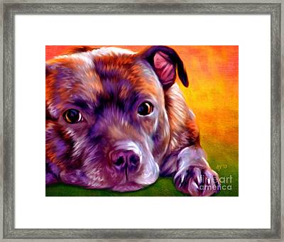 Staffie Staffordshire Bull Terrier Framed Print by Iain McDonald
