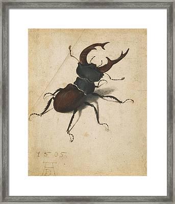 Stag Beetle Framed Print by Albrecht Durer