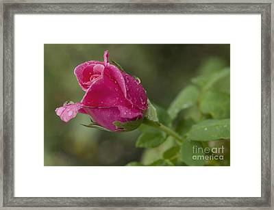 Stage Of Development Framed Print by Nick  Boren