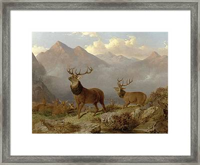 Stags And Hinds In A Highland Landscape Framed Print by John Frederick Herring Jnr
