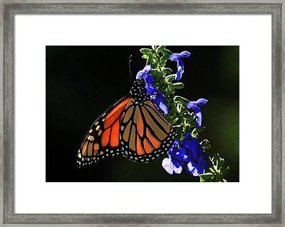 Stained Glass Wings Framed Print by Donna Kennedy