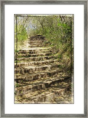 Stair Steps In The Forest Framed Print by Ella Kaye Dickey