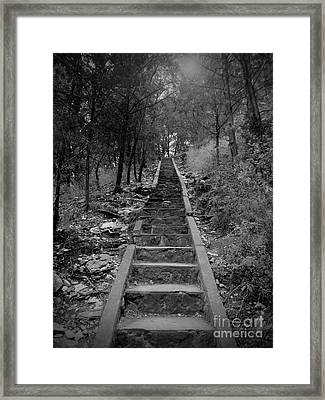 Stairway In The Woods Framed Print by Tina Miller