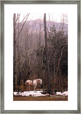 Stallion In The Mountain Pasture Framed Print by Patricia Keller