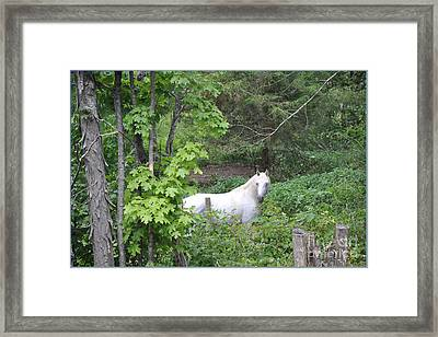 Stallion On Independence Day Framed Print by Patricia Keller