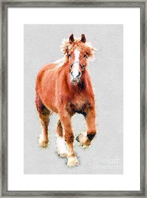Stallion Portrait Framed Print by Dan Friend