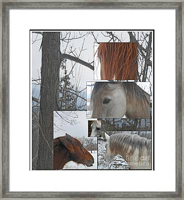 Stallions Collage There Is A Connection Framed Print by Patricia Keller