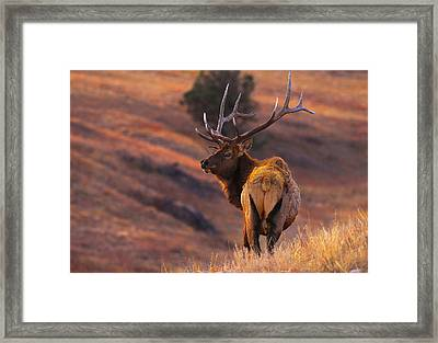 Stand Alone Framed Print by Kadek Susanto