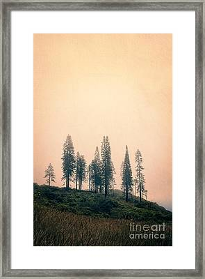 Stand Of Trees Along The Waihe'e Ridge Trail Framed Print by Edward Fielding
