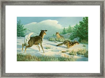 Stand-off  -whitetail Doe And Coyotes Framed Print by Paul Krapf