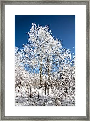 Stand Tall Framed Print by John Haldane