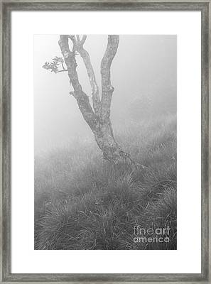 Standalone Framed Print by Hitendra SINKAR