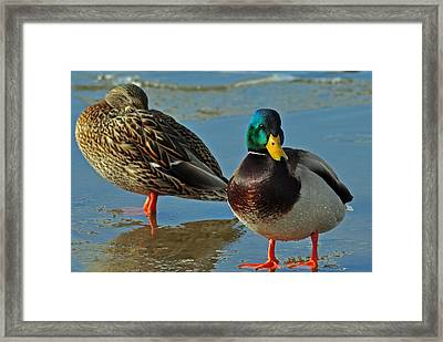 Standing Guard  Framed Print by Eric Rundle