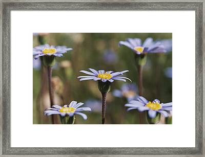 Standing Tall Framed Print by Caitlyn  Grasso