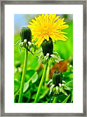 Standing Tall Framed Print by Frozen in Time Fine Art Photography