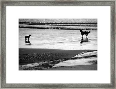 Standoff At The Beach Framed Print by Aidan Moran
