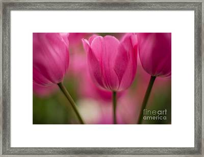 Standouts Framed Print by Mike Reid