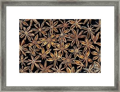 Star Anise Pattern Framed Print by Tim Gainey