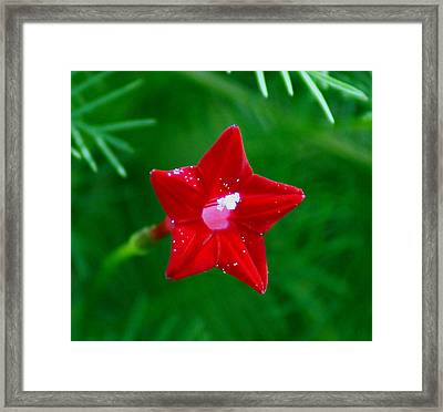 Star Glory Framed Print by Kim Pate