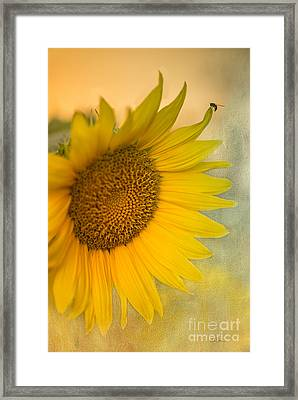 Star Of The Show Framed Print by Betty LaRue