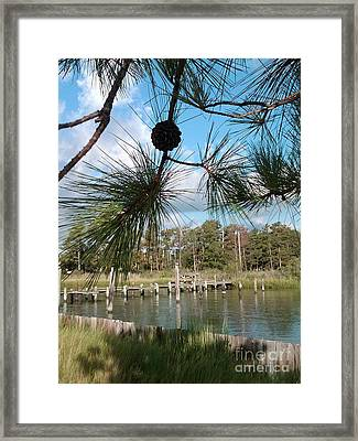 Starburst Pines Framed Print by Katie Adkins
