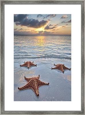 Starfish Beach Sunset Framed Print by Adam Romanowicz