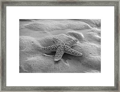 Starfish Framed Print by Betsy C Knapp