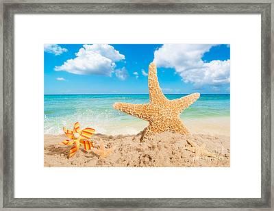 Starfish Framed Print by Amanda Elwell