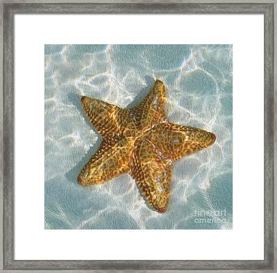 Starfish Framed Print by Jon Neidert
