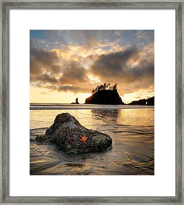 Starfish Framed Print by Leland D Howard