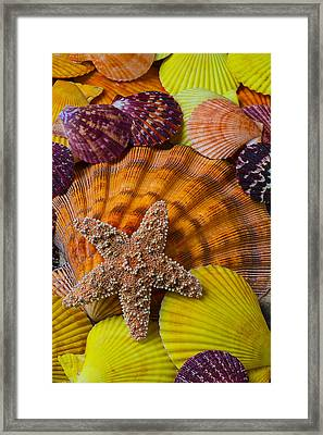 Starfish With Seashells Framed Print by Garry Gay