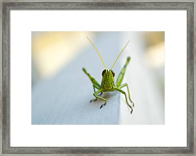 Staring At Me Framed Print by Shelby  Young