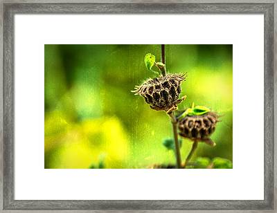 Stark Beauty Framed Print by Jon Woodhams