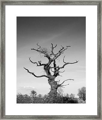Stark Tree Framed Print by Pixel Chimp
