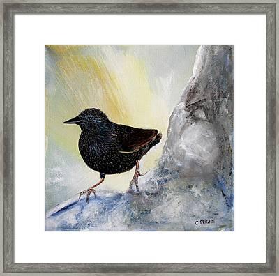 Starling Framed Print by Cecilia Frigati