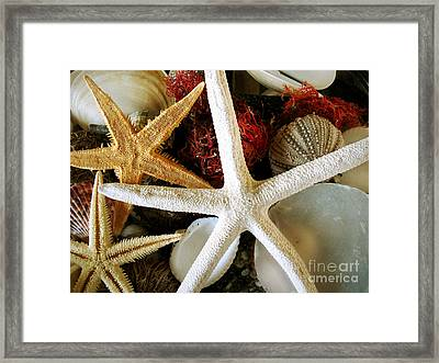 Stars Of The Sea Framed Print by Colleen Kammerer