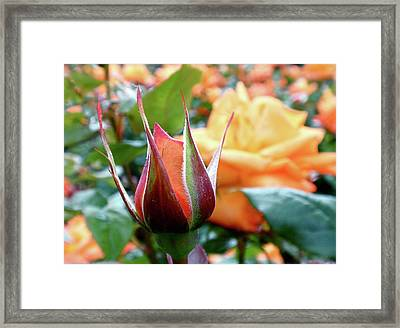 Starting Out Framed Print by Rona Black