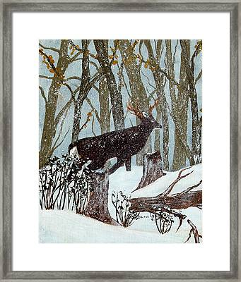 Startled Buck - White Tail Deer Framed Print by Barbara Griffin