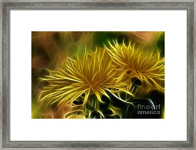 Startled Spider Mums Framed Print by Kaye Menner