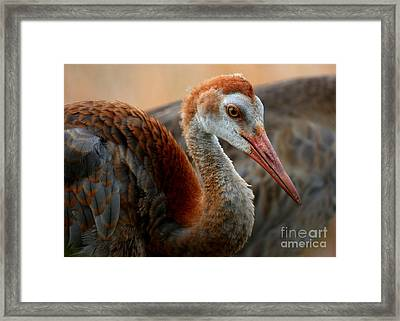 Staying Close To Mom Framed Print by Carol Groenen