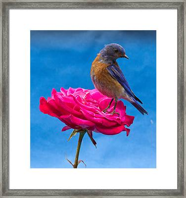 Steady Framed Print by Jean Noren