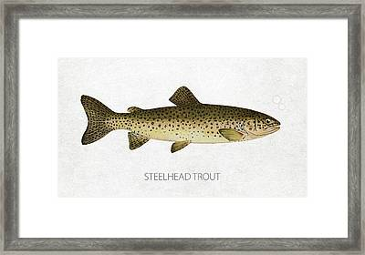 Steelhead Trout Framed Print by Aged Pixel