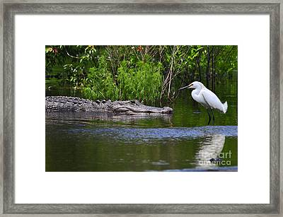 Steely Snowy Framed Print by Al Powell Photography USA
